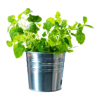 socker-plant-pot__0165550_pe307005_s4
